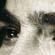 Icona-occhi